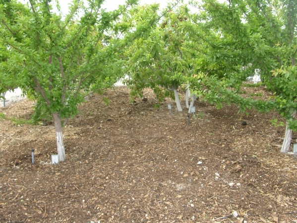 Surface Mulches, Such As Wood Chips, Are Usually The Best Option For Ground  Cover