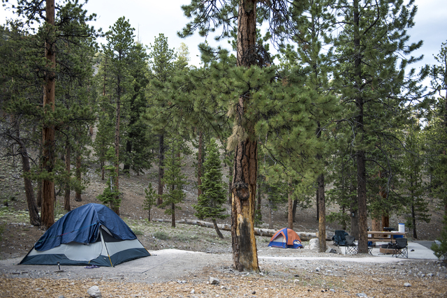 McWilliams Campground is seen at the Spring Mountains National Recreation Area near Mount Charleston in Las Vegas on Tuesday, June 30, 2015. (Martin S. Fuentes/Las Vegas Review-Journal)