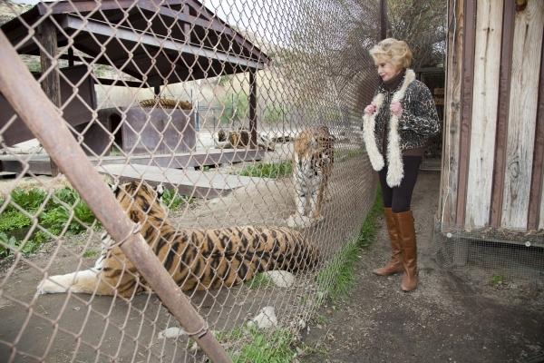 Tippi Hedren Big Cat Sanctuary