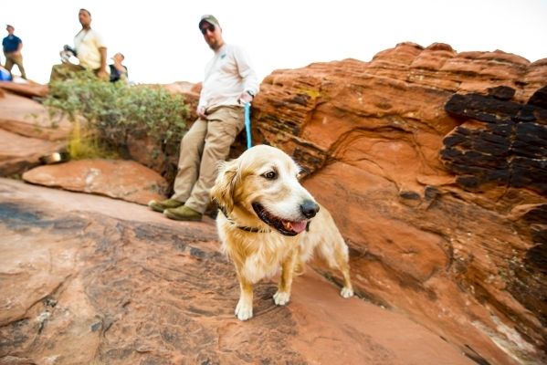 David McMullen holds his service dog, Denver, while watching rock climbers at Red Rock Canyon in Las Vegas on Tuesday, Aug 18, 2015. (Joshua Dahl/Las Vegas Review-Journal)