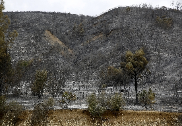 Charred vegetation is seen along Highway 20 during the Rocky Fire in Lake County, California August 4, 2015.  (Robert Galbraith/Reuters)