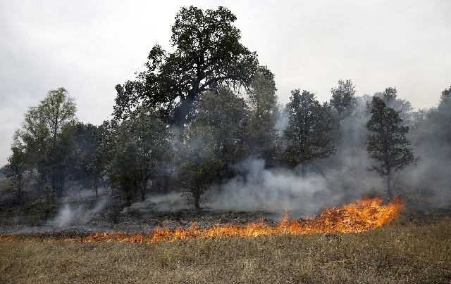 Fire burns at the base of trees along Highway 20 during the Rocky Fire in Lake County, California August 4, 2015.  (Robert Galbraith/Reuters)