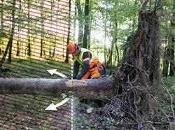 Weathering the storm: 9 necessary tips for using a chainsaw to clear debris