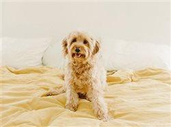 With great puppy comes great responsibility: 7 tips to dog-proof your home
