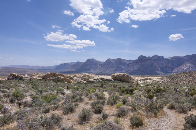 Rugged arid valley of Red Rock national conservation area with rocky mountain peaks and desert shrubbery in late spring. (Thinkstock)
