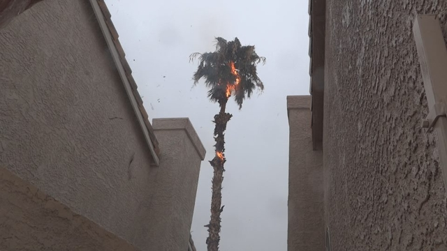 """""""My Neighbor's palm tree over here in Whitney Ranch got struck by lightning a couple hours ago."""" (Greg Lamb/Facebook)"""