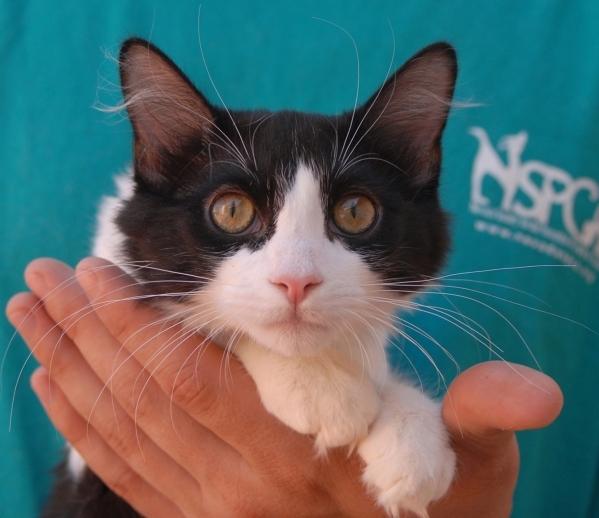 Alessandra, Nevada SPCA