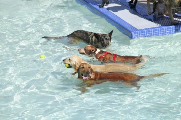 Doggie Paddle & Play Day is scheduled for Sept. 12 at the Black Mountain Aquatic Complex, 599 Greenway Road, when dogs will be allowed to swim in the pool before it is drained for the season.  ...