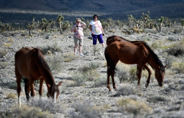 Tourists Candace Romano, left, and Judy Erich, both from Ohio, watch wild horses graze in the desert near the community of Cold Creek on Friday, Aug. 28, 2015. (David Becker/Las Vegas Review-Journal)