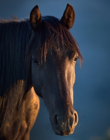 A wild horse looks on near the community of Cold Creek on Friday, July 24, 2015. (David Becker/Las Vegas Review-Journal)