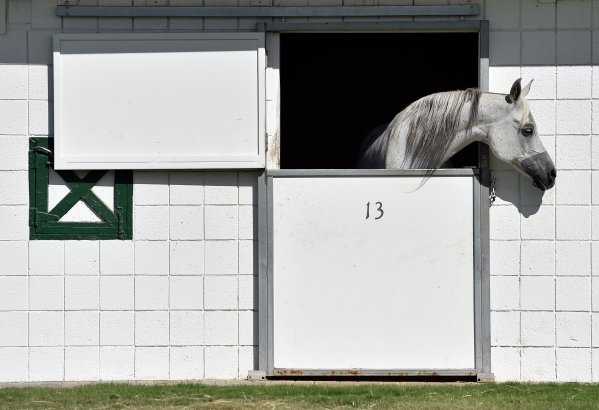 One of Wayne Newton's Arabian horses peers out of a stall at Casa de Shenandoah on Monday, Sept. 14, 2015, in Las Vegas. The ranch at Sunset and Pecos roads in Las Vegas is scheduled to open ...