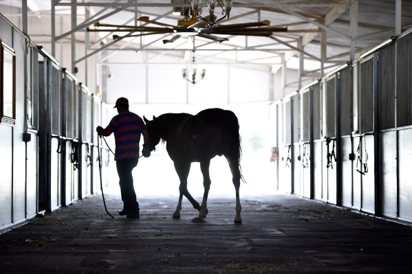 One of Wayne Newton's Arabian horses is returned to a stall at Casa de Shenandoah on Monday, Sept. 14, 2015, in Las Vegas. The ranch at Sunset and Pecos roads in Las Vegas is scheduled to op ...