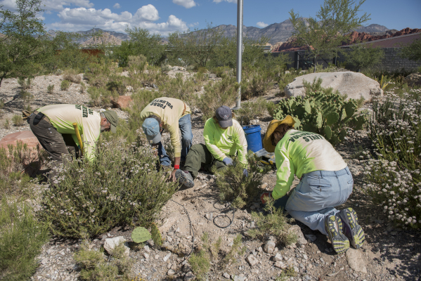 Friends of Red Rock Canyon volunteers, from left, Jeff Young, Doyle Wayman, Mary Russell, Patricia Potter, fix irrigation at visitor center inside the Red Rock National Conservation Area in Las Ve ...