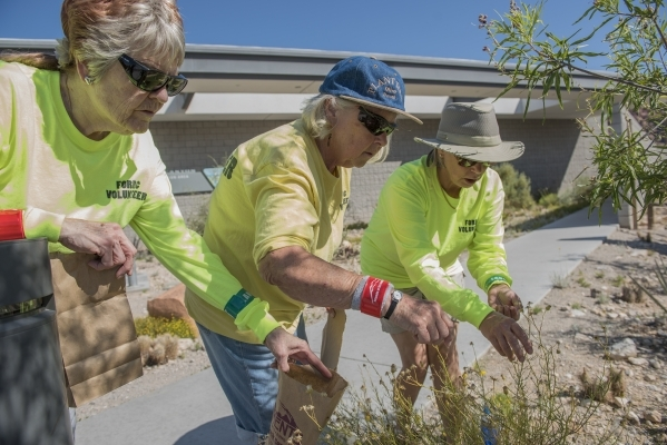 Friends of Red Rock Canyon volunteers, from left, Vivienne Toliusis, Carol Swearingen and Shari Young collect seeds for planting at the visitor center inside Red Rock National Conservation Area in ...