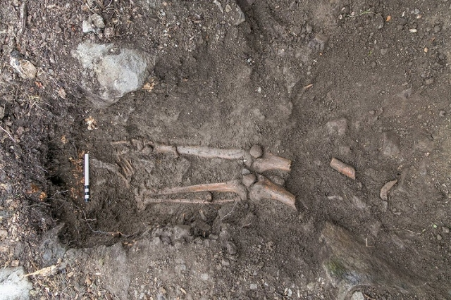 The skeleton of a Gaelic man who died nearly 1,000 years ago was discovered when wind toppled this tree in Ireland. Radiocarbon dating suggests the remains date back to the early medieval period,  ...