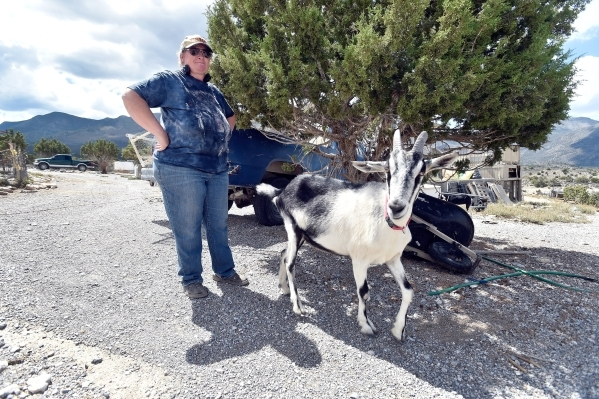 Executive director Lakota Spoolman of the Desert Rescue Animal Sanctuary walks across the sanctuary property with Stevie, one of the goats she cares for, in Cold Creek on Friday, Aug. 28, 2015. (D ...