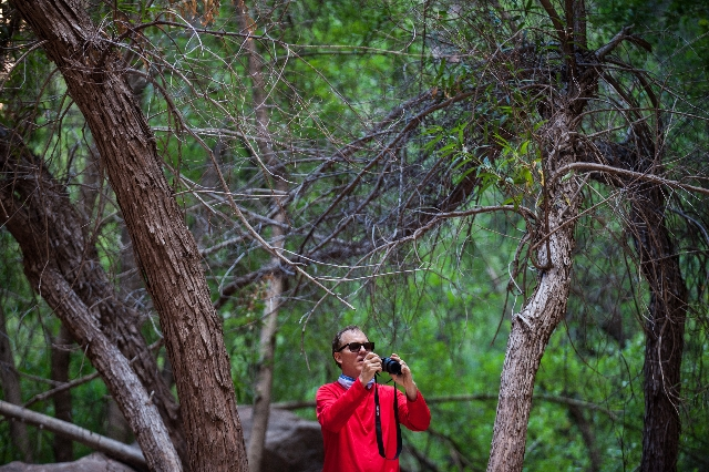 A man takes a photo at the Upper Emerald Pool at Zion National Park in Utah on Sunday, Sept. 6, 2015. Chase Stevens/Las Vegas Review-Journal Follow @csstevensphoto