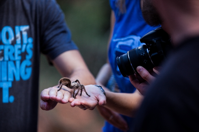 Hikers hand off a tarantula found along the Emerald Pools trail at Zion National Park in Utah on Sunday, Sept. 6, 2015. Chase Stevens/Las Vegas Review-Journal Follow @csstevensphoto