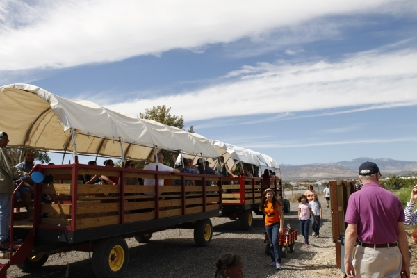 People visit the Gilcrease Orchard in Las Vegas Saturday, Sept. 27, 2014. The orchard opened their pumpkin patch for picking. (Erik Verduzco/Las Vegas Review-Journal)