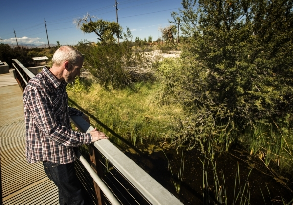 Las Vegas Water District spokesman Bronson Mack overlooks a pond at Springs Preserve, 333 South Valley View Boulevard on Tuesday Oct. 13, 2015  The Las Vegas Valley Water District wants to team wi ...