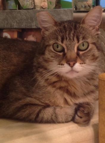 Bella, Foreclosed Upon Pets, Inc.