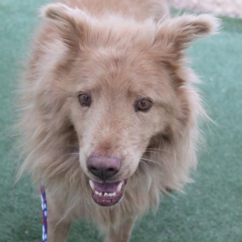 Sasha, The Animal Foundation