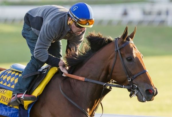 Exercise rider Jorge Alvarez gallops Triple Crown winner American Pharaoh around the training track for the first time Thursday morning October 29, 2015, since arriving at Keeneland Race Track in  ...