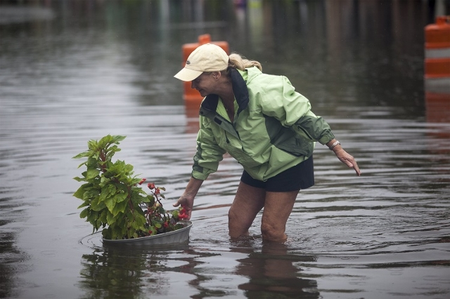 Ginger Richardson grabs a floating plant during an inspection of a office building on Front Street in Georgetown, South Carolina October 4, 2015. (Reuters/Randall Hill)