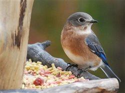 Not all birds migrate - how to attract resident birds to your backyard during cold weather