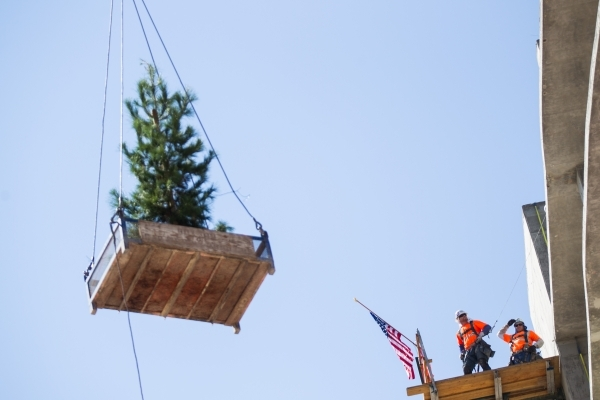 "The ceremonial tree is raised during the ""topping off"" ceremony at the Lucky Dragon hotel-casino in Las Vegas on Friday, Sept. 11, 2015. Chase Stevens/Las Vegas Review-Journal Follow @cs ..."