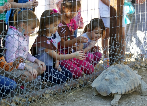 Girl Scouts Troop 109 members look at a tortoise while visiting Gilcrease Nature Sanctuary Saturday, Oct. 24, 2015, in Las Vegas. The sanctuary, located at 8103 Racel St., was established in 1970  ...