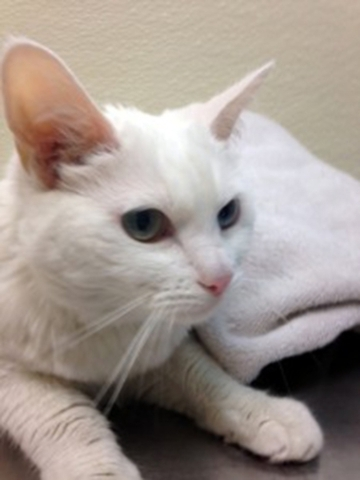 Mimi, Foreclosed Upon Pets Inc.