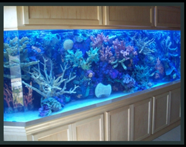 Las Vegas-based Acrylic Tank Manufacturing builds unique aquariums and ponds for homes and businesses.   COURTESY