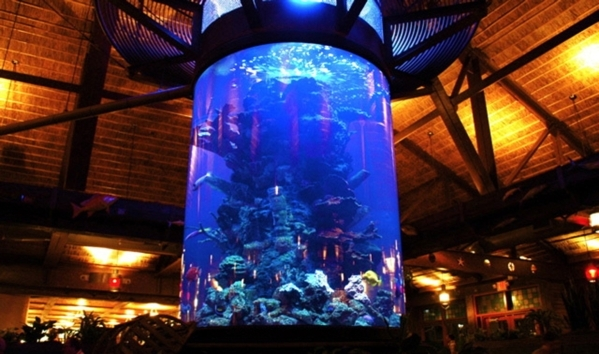 "Wayde King and Brett Raymer, hosts of Animal Planet's ""Tanked,"" creates unique aquariums for homes and businesses. COURTESY"