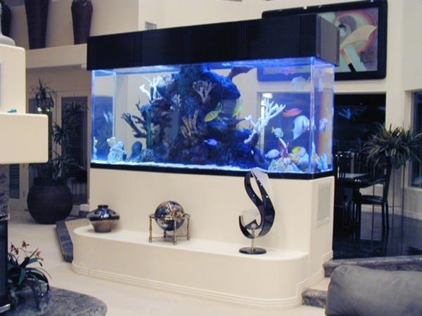 Reality show tanked boosts aquarium sales photos las for Fish tank camera