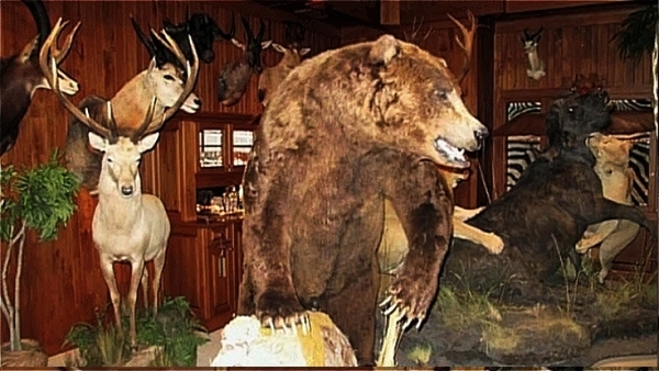 Some Of The Pieces Are North American Species And Have Been Scattered Throughout Museum