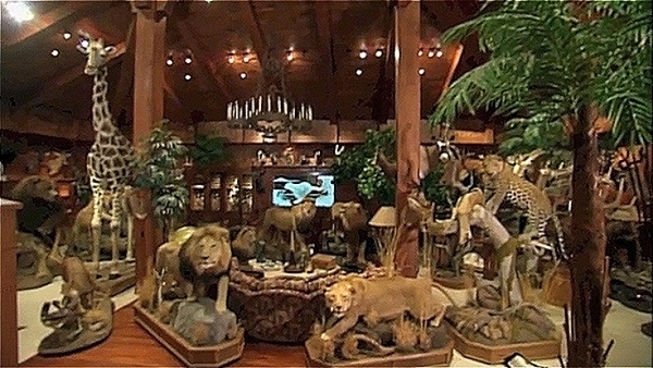 Gary Primm Donated His 99 Piece Collection Of Exotic Animals Valued At 650000 To