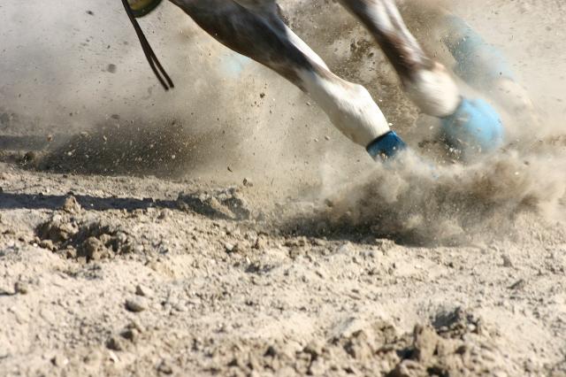 Horse Racing (Thinkstock)