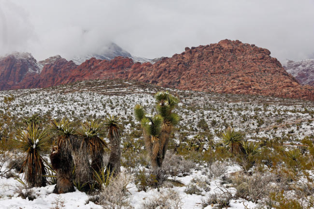 Snowfall can be seen at Red Rock Canyon National Conservation Area Monday, Feb. 23, 2015, in Las Vegas. (Ronda Churchill/Las Vegas Review-Journal)