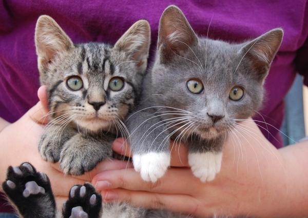 Drake & Josh, Nevada SPCA