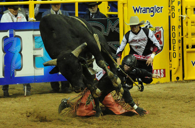 Bull rider Sage Kimzey from Strong City, Okla., is bucked from his bull during the first go-round of the 2015 Wrangler National Finals Rodeo at the Thomas & Mack Center in Las Vegas  Thursday, ...
