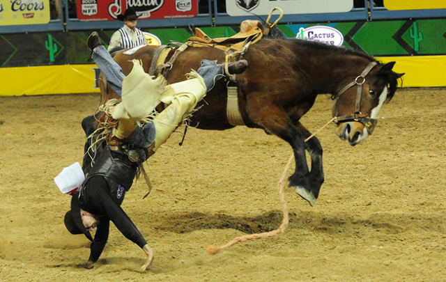Saddle bronc rider Tyrel Larsen from Inglis, Manitoba, is bucked from his horse during the first go-round of the 2015 Wrangler National Finals Rodeo at the Thomas & Mack Center in Las Vegas  T ...