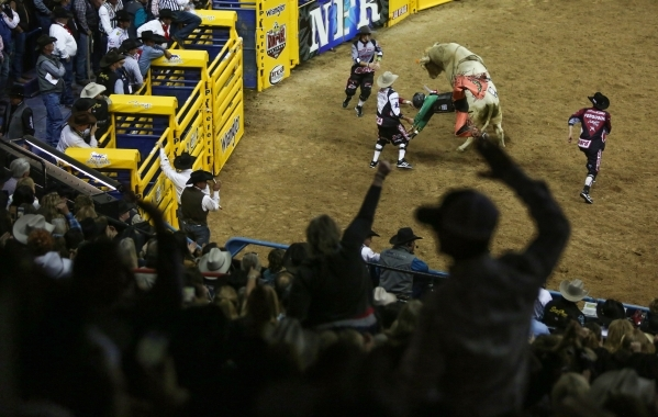Fans cheer as Sage Kimzey, of Strong City, Okla., is thrown off by Uncle Jerry on the second day of the 2015 Wrangler National Finals Rodeo at the Thomas & Mack Center in Las Vegas on Friday,  ...