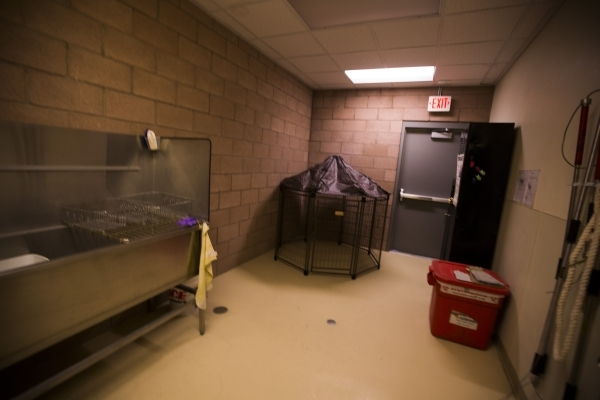 The room in the  Boulder City Animal Control Shelter, 810 Yucca Street,  is seen Tuesday, Dec. 1, 2015 where former supervisor Mary Jo Frazier  alleged euthanizing animals. Police reported that sh ...