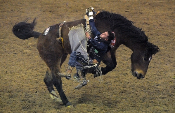 Bareback rider Caleb Bennett from Tremonton, Utah, is bucked from his horse during the 8th go-round of the National Finals Rodeo at the Thomas & Mack Center in Las Vegas Thursday, Dec. 10, 201 ...
