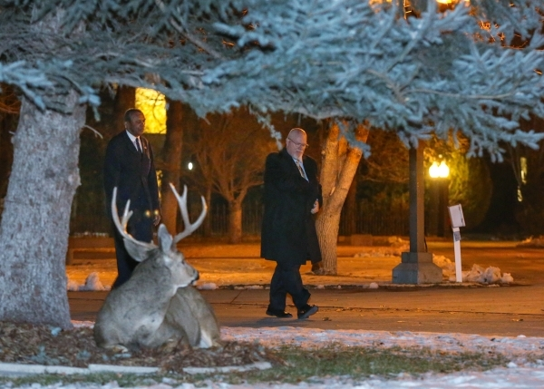 A buck watches as Nevada Assembly members Harvey Munford, left, and Randy Kirner return to the Legislative Building after notifying the Governor the Assembly is convened and ready for business in  ...