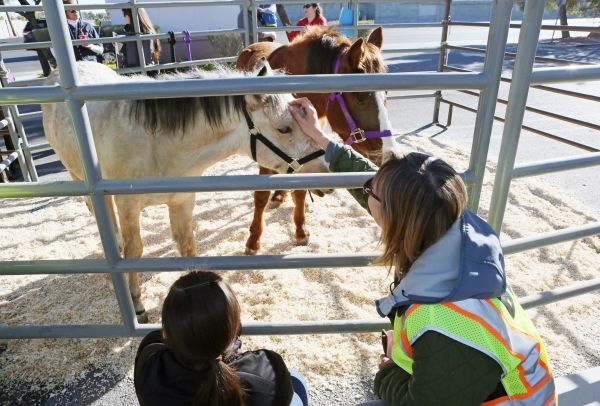 Susan Farkas, right, pets Darcy Annie, a 4-month-old buckskin filly, during an adoption event outside the Bureau of Land ManagementþÄôs Southern Nevada District Office on Saturday, Dec. 1 ...