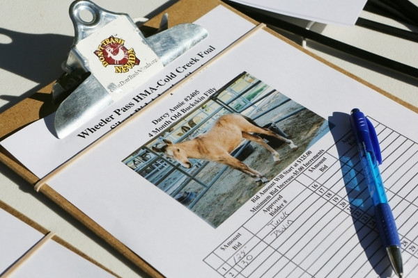 A silent auction form is shown for Darcy Annie, a 4-month-old buckskin filly, during an adoption event outside the Bureau of Land ManagementþÄôs Southern Nevada District Office on Saturda ...