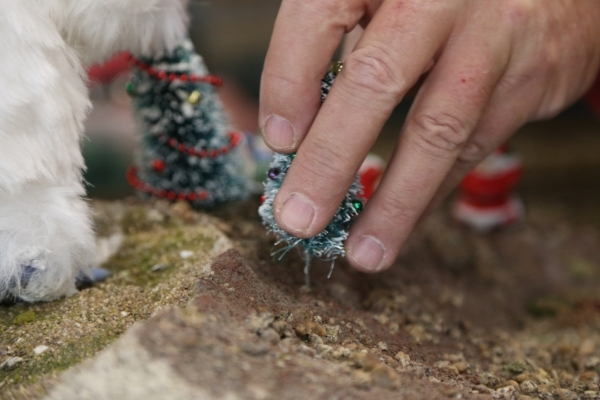 Jim Hayes places a tree on the model garden railway display the Las Vegas Railway Society organized at Jim Marsh Kia in northwest Las Vegas Sunday, Dec. 20, 2015. The display will be open to the p ...