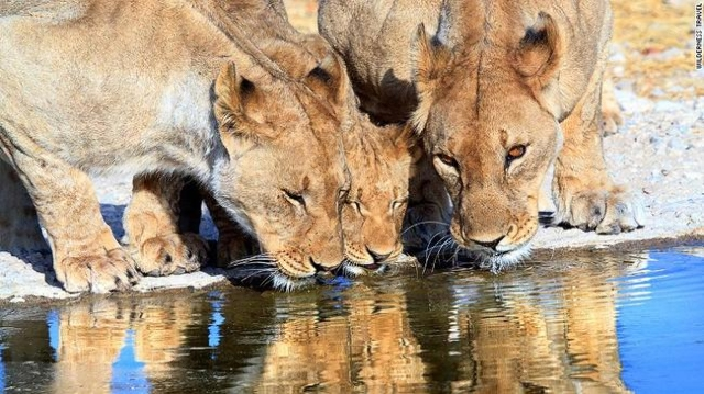 Here, kitty kitty. Namibia might just be Africa's top destination for wildlife tourists. (CNN)